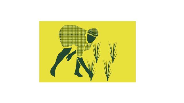 SOS Faim Zoom microfinance et Dynamiques paysannes